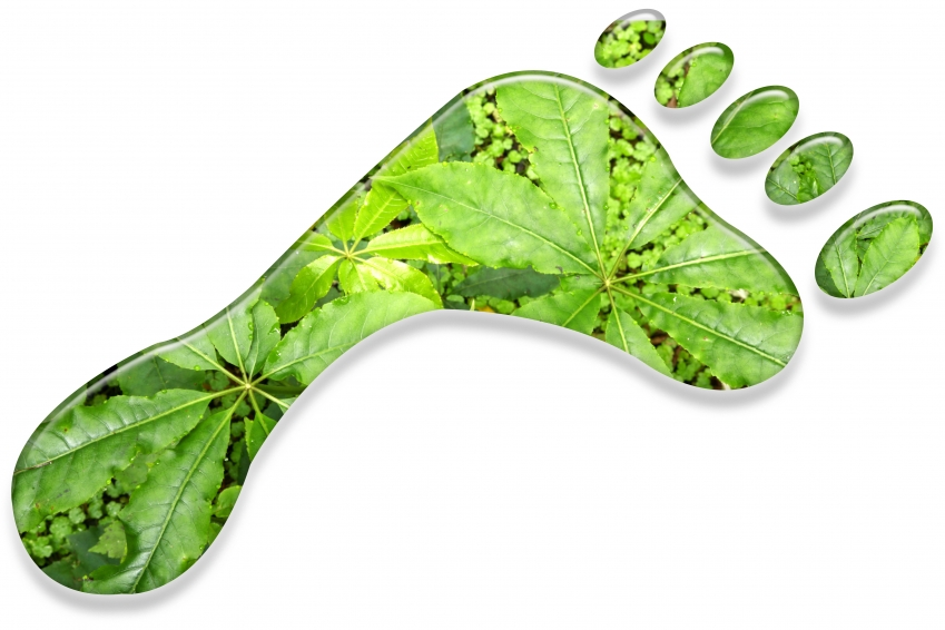 Reduce Your Carbon Footprint in 10 Simple Ways