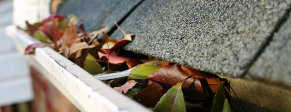 When Is the Best Time to Have Gutters Cleaned?